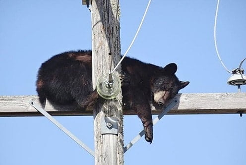 please-bear-with-us